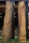 #3 Black Locust (Robinia pseudoacacia) 84x12x2.5 $220.5